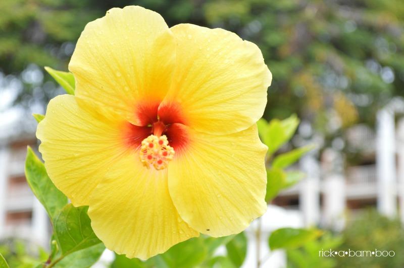 Hawaiian flower   rickabamboo.com   #maui #hawaii